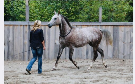 Liberty Horsemanship International Horse Trainer Lorie Duff Sweden September 2019